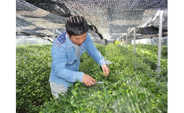 OMACCHAYA's artisanal tea making in a few words…
